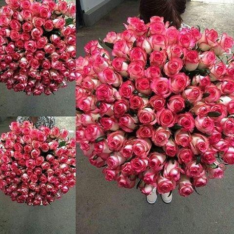 Букет из 101 розы сорт Джумилия №49
